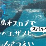 ベルトラのツアーレビュー!セブ島オスロブでジンベエザメと写真撮影