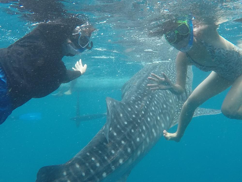 ベルトラ!セブ島で念願のジンベエザメとの水中写真